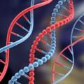Il genoma e la meditazione